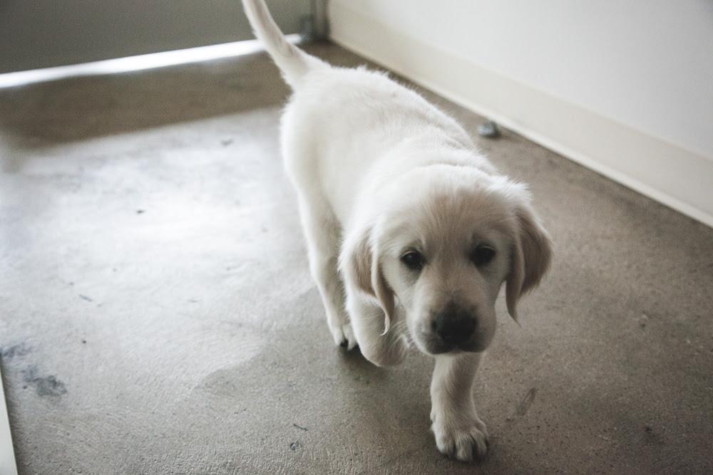 Murphy the Dog